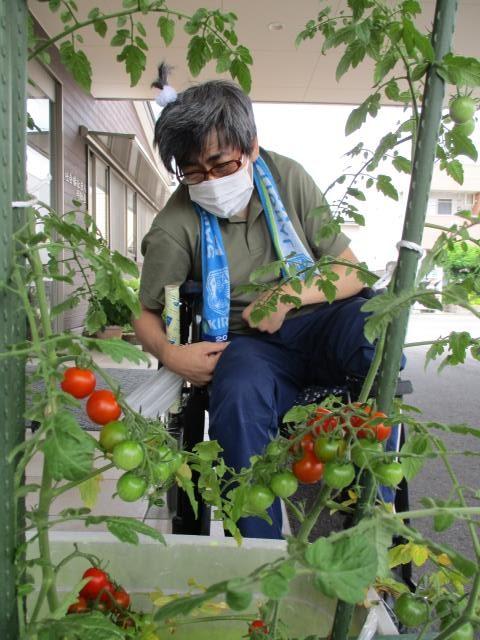 ★Masa夢 トマト収穫